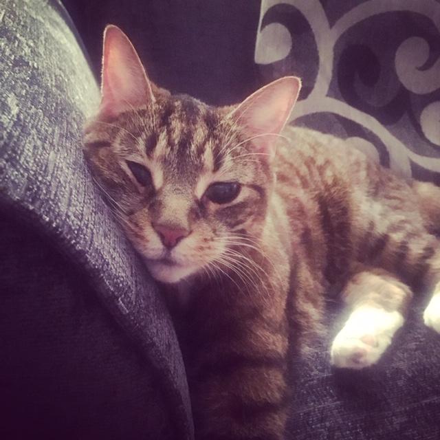 Cat IMG_2493